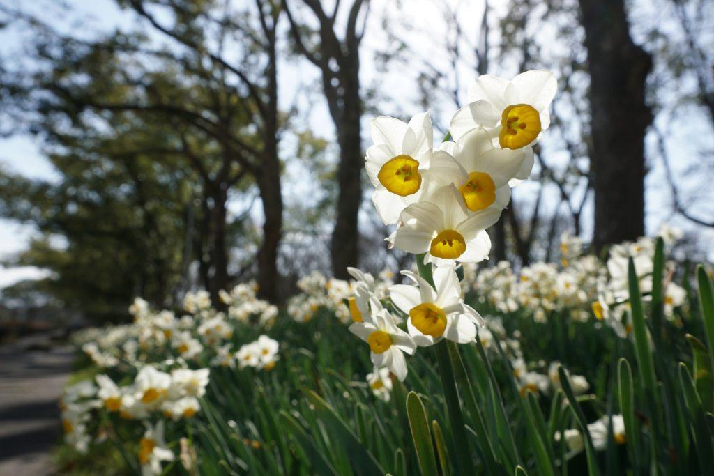 陽気な春の日差し